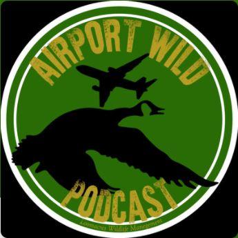 Aircraft birdstrike avoidance radar podcast thumbnail
